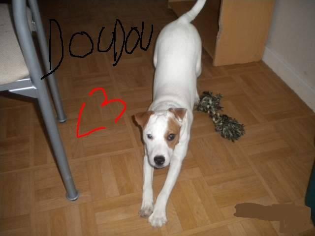 doudou - Mâle (1 an)