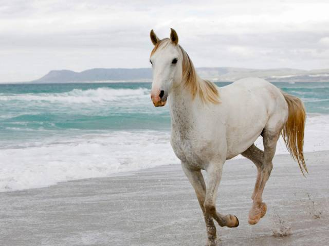 cheval -