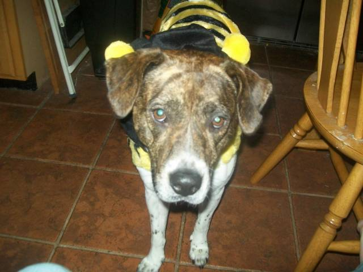 Queen Bee Aggie - (2 ans)