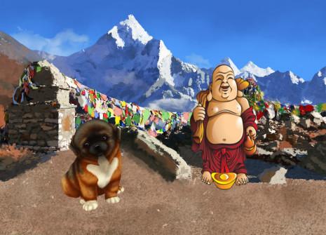 Adoptez un chien tout droit descendu de l'Himalaya: l'Epagneul Tibétain !