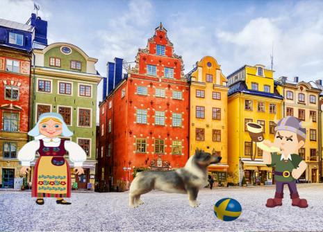 Le Vallhund nous arrive de Suède: adoptez-le!